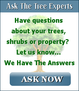 ask the tree experts