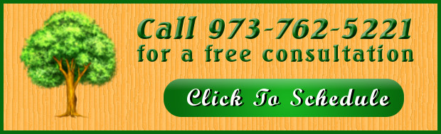 tree service free consultation