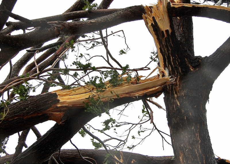prevent emergency tree service